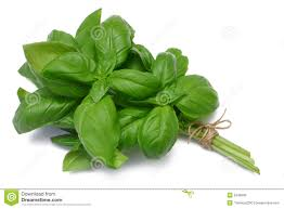 herb stock photos images u0026 pictures 753 965 images