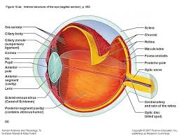 Picture Of Eye Anatomy An Honest Look At The Glaucoma And Marijuana U2014 Steemit