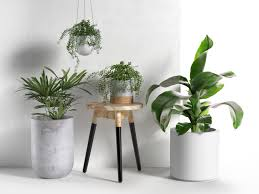 Room With Plants And Pots With Plants