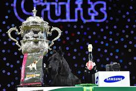 affenpinscher crufts 2016 crufts 2017 first day winners results and full schedule as