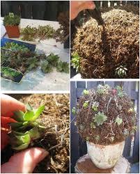 decoration jardin marocain boule plantes grasses idee deco jardin tourcoing 16 design