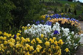 Image Flower Garden by Growing Irises All Season Long Garden Design For Living