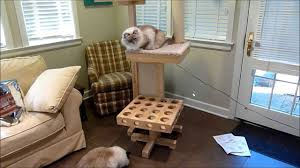 ragdoll cats review cat power tower designer cat tree for review