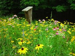 native plant garden design michigan flowering trees native u2014 farmhouse design and furniture