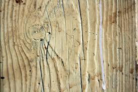 planche de bouleau images gratuites arbre branche grungy planche cru rétro