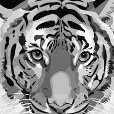 White Tiger Shower Curtain Black And White Tiger Mix Shower Curtain Tigers And Products