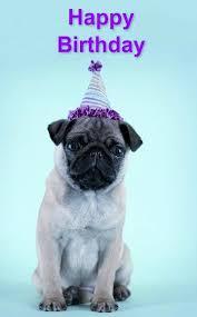 pug birthday card best pug birthday products on wanelo printable