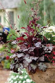 perennials in your southern garden garden club