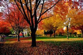 tracking autumn leaves fall foliage