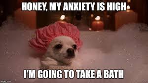 Bubble Bath Meme - chihuahua bubble bath meme generator imgflip