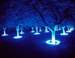 carson white gardens lights and gardens