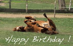 Horse Birthday Meme - happy birthday wishes with horses lovely birthday wishes with