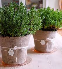 Potted Plants Wedding Centerpieces by 1118 Best Country Wedding Ideas Images On Pinterest Marriage