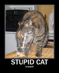Stupid Cat Meme - image 134792 x y is x redundant adjectives are redundant