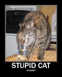 Stupid Cat Meme - image 134792 x y is x redundant adjectives are redundant