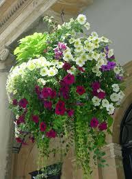 Best Plants For Hanging Baskets by Summer Hanging Basket Ideas Home Design U0026 Architecture Cilif Com