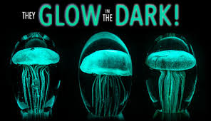 glow in the glow in the jellyfish sculptures