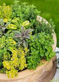37 best veggie garden ideas images on pinterest gardens veggie