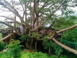 Tree Houses Around The World Large Tree Houses With Exotic Wooden Shape Near The River For