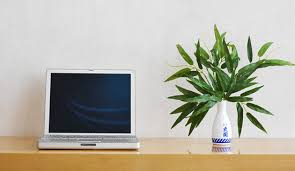 plant on desk 5 reasons to have a plant at your desk office plants desks and