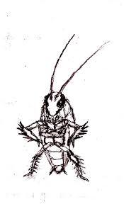 illustrated cartoon cockroach rhahsid deviantart