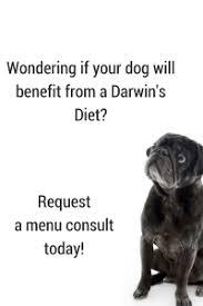 the pet owner u0027s guide to organic dog food darwin u0027s pet food