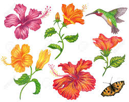 set of hibiscus flower with hummingbird and butterfly stock photo