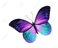 Blue And Green Butterfly - best 25 purple butterfly ideas on beautiful