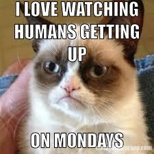 Monday Meme - grumpy cat monday meme album on imgur