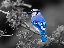 top 10 most beautiful blue colored birds in the world buzz inn in