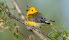 Nc Backyard Birds Audubon Ambassador Actions 2017 Audubon North Carolina