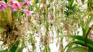 winter flowers for the garden dunneiv org