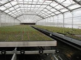 Metal Greenhouse Benches Nexus Greenhouse Systems Fixture Palletized Rolling Benches