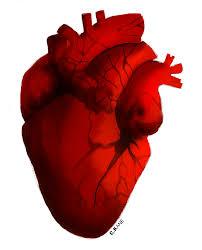 human heart clip art hostted 2 clipartbarn