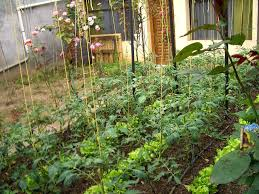 Small Vegetable Garden Ideas by Small Vegetable Garden Ideas Vertical Growth The Garden Inspirations