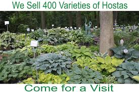 south central pennsylvania native plants the hosta hideway of york springs pennsylvania