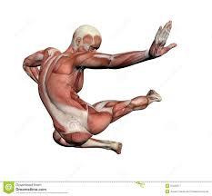 Human Anatomy Male Human Anatomy Male Muscles Royalty Free Stock Photography