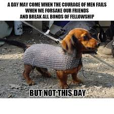 Funny Dogs Memes - 45 funny dog memes dog memes dog and funny puppies