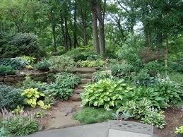 native woodland plants shade garden plants zone 7 darxxidecom