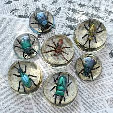mark montano faux bugs in resin