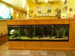 Fish Tank Desk by Fish Tank Under The Front Desk Yelp