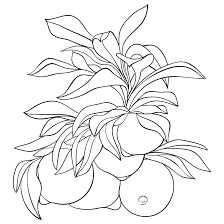 flowers coloring pages u2022 got coloring pages
