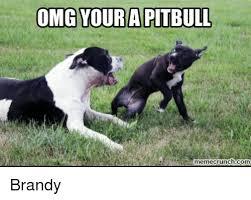 Pitbull Meme - 25 best memes about pitbull meme pitbull memes