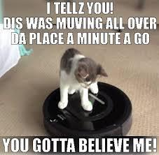 Morpheus Cat Meme - 472 best i love funny cats images on pinterest funny cat photos