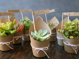 Wedding Gift Delivery 12 Ultimate Great Ideas For Lovely Plant Wedding Favors Plants