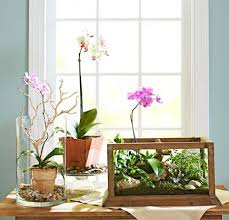 indoor plant display 4 ideas for stylish indoor plant displays midwest living