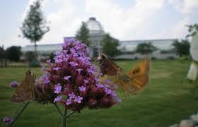 native virginia plants attract native butterflies