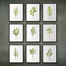 kitchen print set herb watercolor painting botanical chart