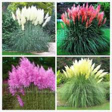 dropshipping ornamental grasses uk free uk delivery on
