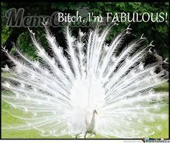 Peacock Meme - fabulous peacock by kusholion meme center